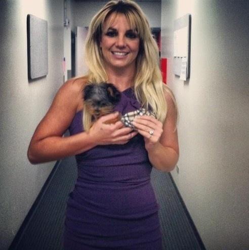 10.dez.2012 - Britney Spears divulgou uma imagem de sua cadelinha, Hannah, usando a mesma roupa que ela