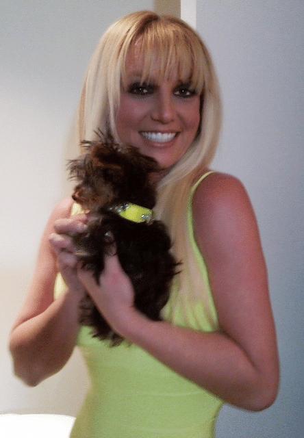 13.dez.2012 - Britney Spears voltou a postar fotos sobre sua cadelinha adotada Hannah usando uma coleira que combinava com seu vestido. A cantora criou uma conta no Twitter para a pet